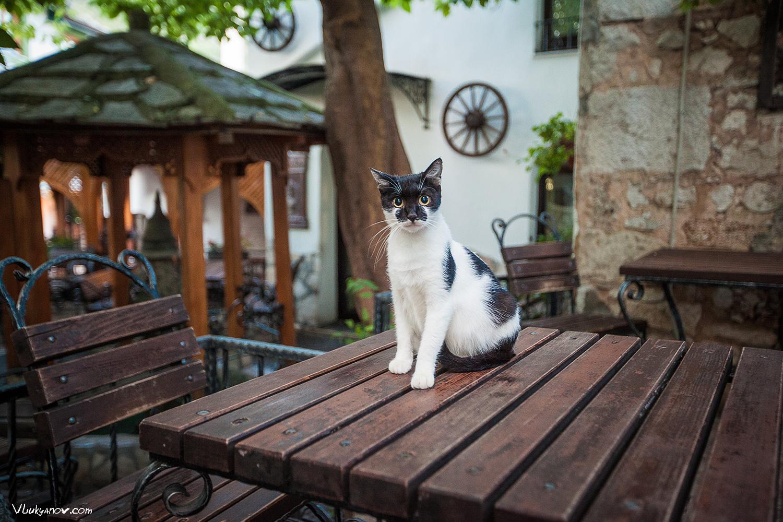 Балканы, Мостар, Босния и Герцеговина, Владимир Лукьянов, Фотограф, кот, коты