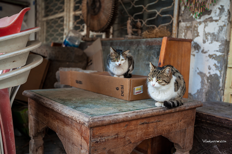 Фотограф, Владимир Лукьянов, Турция, Каппадокия, коты, котэ, кошки