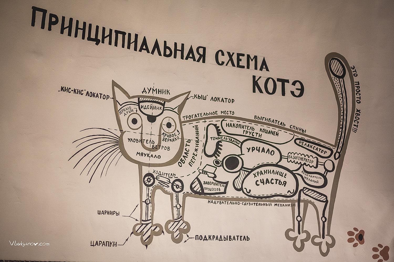 Россия, Калининград, Калининградская область, Владимир Лукьянов, Фотограф, Коты