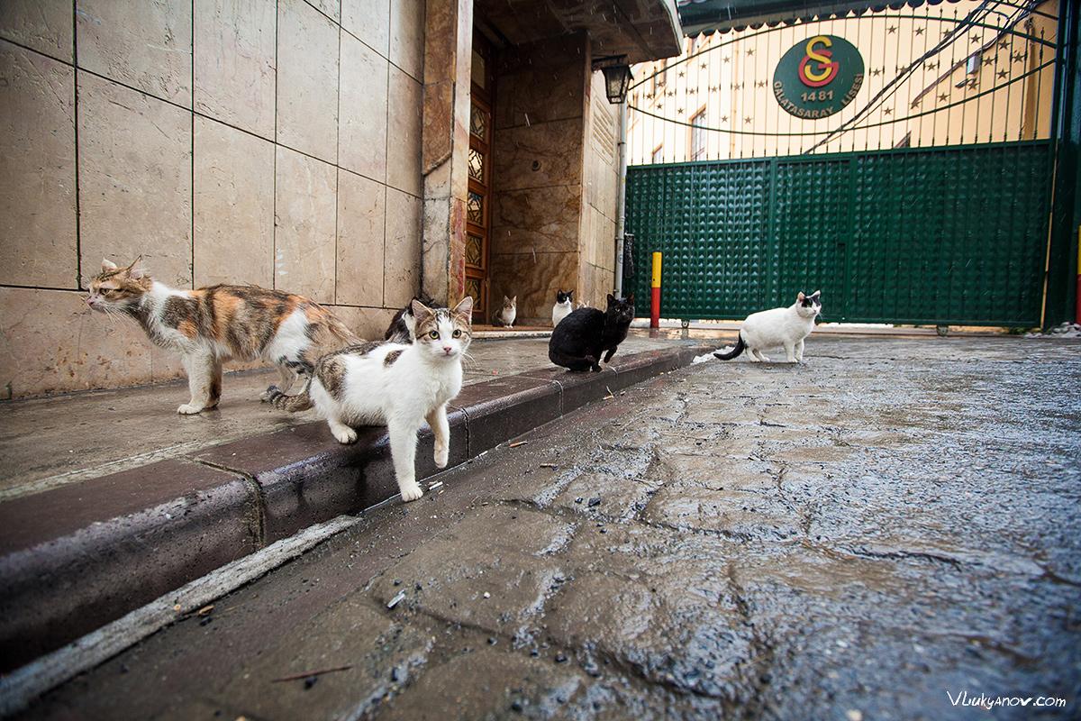 Владимир Лукьянов, Фотограф, Стамбул, Турция, Путешествие, город, кот