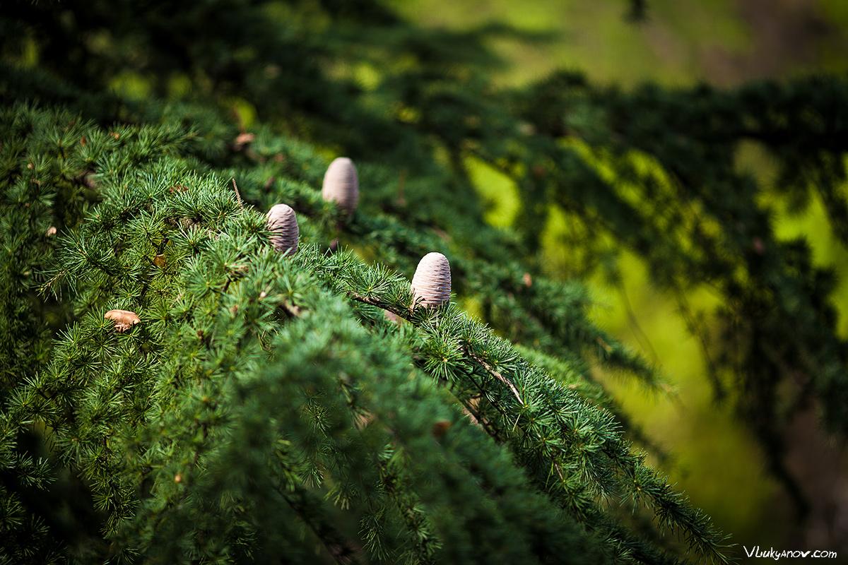 Владимир Лукьянов, Фотограф, Грузия, город, Тбилиси, Тифилис, сад, ботанический сад, крепость, Нарикала