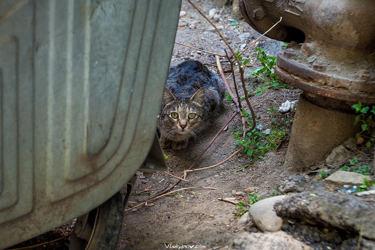 Владимир Лукьянов, Фотограф, Грузия, город, Тбилиси, коты